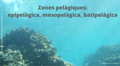 zones oceàniques