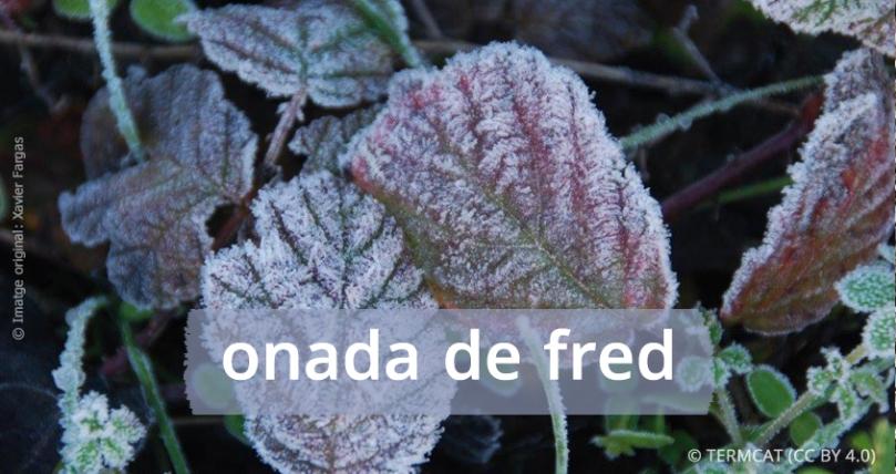 onada_de_fred