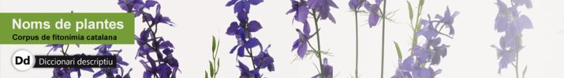 capcaleradlnomsplantes
